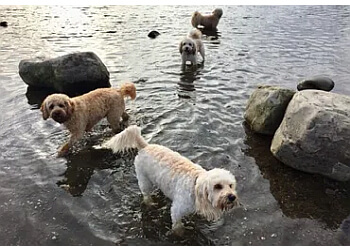 Wooftidoos Dog Walking & Pet Services