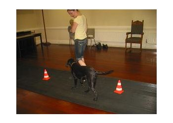 Wuff Dog training & behavioural advice